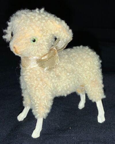 CUTEST CURLY HAIR GERMAN WOOL DOG FOR PUTZ DISPLAY
