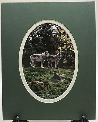 Alpha Gray Wolf Photo Wall Picture Nature Wildlife Photograph Signed Green 8x10