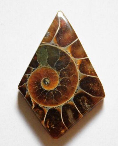 19.55 Cts Natural Ammonite Loose Cabochon Gemstone 32X21X4.5mm 03
