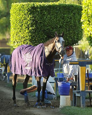8x10 color photo - ARROGATE Classic Winner