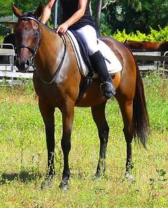 JANEIRO: PLACID,QUIET,LAID BACK,GENTLE,SWEET CONFIDENCE BOOSTER Beaudesert Ipswich South Preview