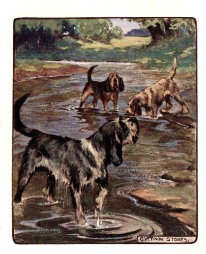 1906 Antique OTTERHOUND Print Vernon Stokes Dog Art Illustration 3937L