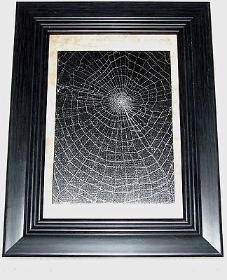 REAL FRAMED PRESERVED SPIDER WEB ORB WEAVER MATTED BLACK WOOD FRAME 9IN X 7IN