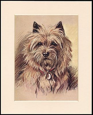 CAIRN TERRIER HEAD STUDY CHARMING MOUNTED DOG PRINT READY TO FRAME
