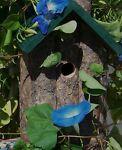 Mary J s Wild Bird Store