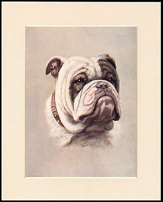 BRITISH BULLDOG HEAD STUDY GREAT DOG PRINT MOUNTED READY TO FRAME