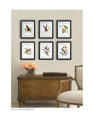 set of 6 Vintage Hummingbird Art Prints Antique Bird art wall hanging home decor