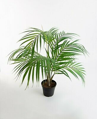 R PLANT - tropical palm tree rainforest artificial  (Faux Palme)