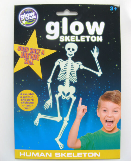 the original glowstars company glow human skeleton | ebay, Skeleton