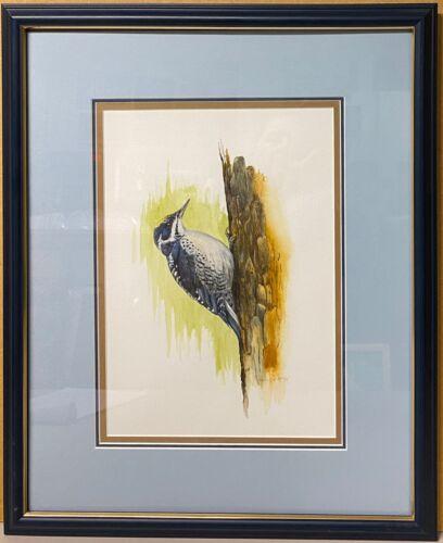 Original Bird Painting Arctic Black-Backed Three Toed Woodpecker by Barry MacKay