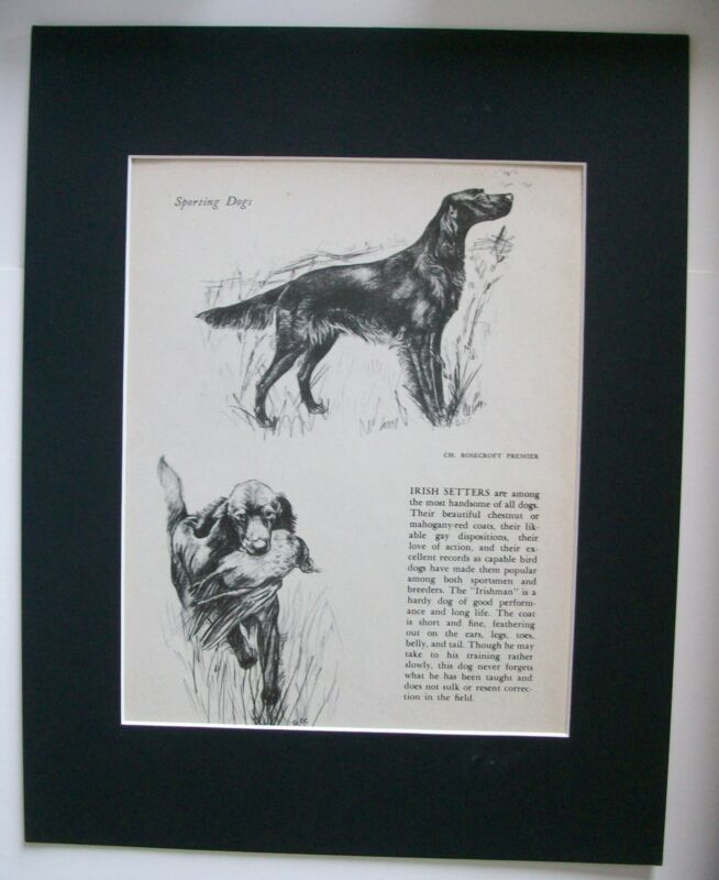 Irish Setter Dog Print Gladys Emerson Cook Breed Writeup 1945 Bookplate Matted
