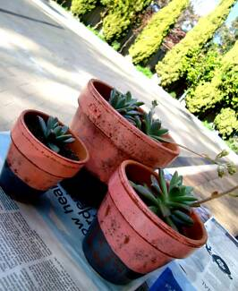 Ornamental Succulent Creations Bassendean Bassendean Area Preview