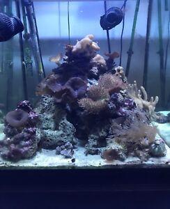 Aquarium eau salée 60g