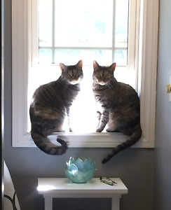 FREE- 2 Sweet cats to rehome