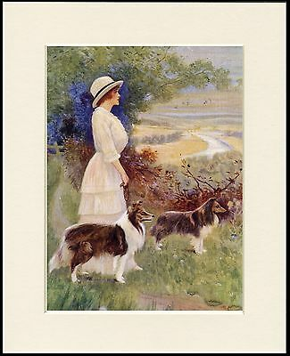 ROUGH COLLIE LADY AND DOGS LOVELY LITTLE DOG PRINT MOUNTED READY TO FRAME