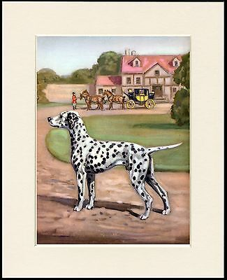 DALMATIAN LOVELY DOG ART PRINT MOUNTED READY TO FRAME