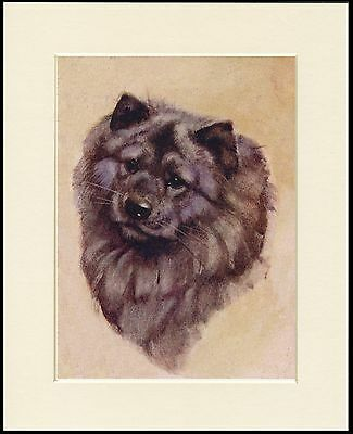 CHOW CHOW LOVELY HEAD STUDY DOG PRINT MOUNTED READY TO FRAME