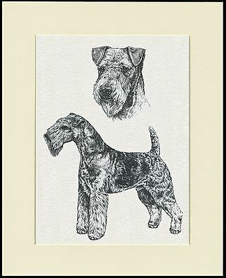 LAKELAND TERRIER DOG SKETCH PRINT MOUNTED READY TO FRAME