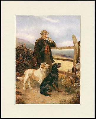 GORDON AND ENGLISH SETTER MAN AND DOGS LOVELY DOG PRINT MOUNTED READY TO FRAME