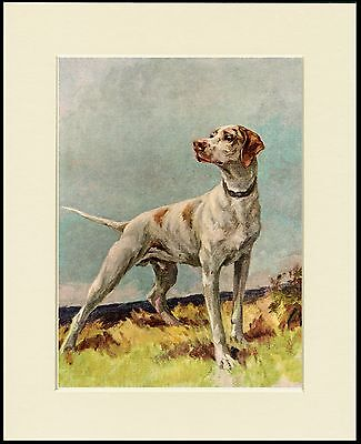 POINTER GREAT LITTLE DOG PRINT MOUNTED READY TO FRAME
