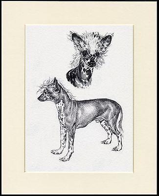 CHINESE CRESTED LOVELY LITTLE DOG SKETCH  PRINT READY MOUNTED