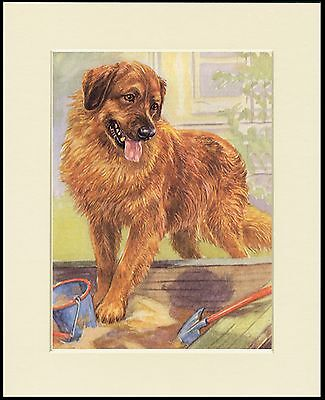 LEONBERGER LOVELY LITTLE DOG PRINT MOUNTED READY TO FRAME
