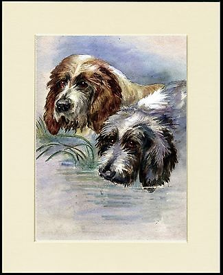 OTTERHOUND TWO DOGS HEAD STUDY LOVELY DOG PRINT MOUNTED READY TO FRAME