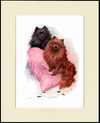 POMERANIAN TWO DOGS ON A PINK CUSHION LOVELY DOG PRINT MOUNTED READY TO FRAME