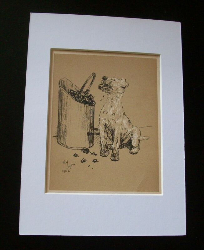 Dog Cecil Aldin Bookplate Print 1902 Eat Bucket Of Coal Matted Terrier? Mutt