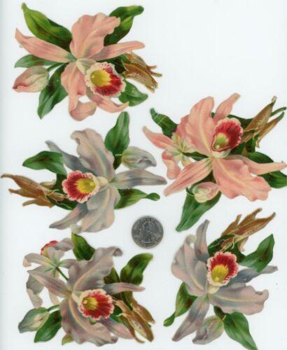 1880's Lot of 5 Tropical Flowers Die Cut Victorian Scrap X198