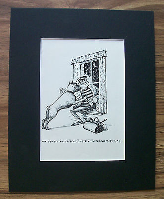 Dog Cartoon Print Norman Thelwell Likes Burglar Bookplate 1964 8x10 Matted Cute