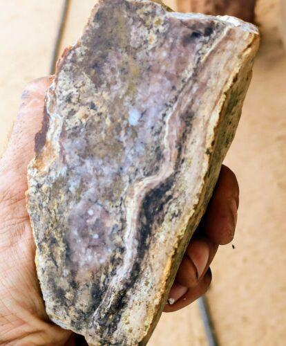 1 lb 2.8 oz mohave desert Fossil  Stromatolite  Specimen  Rare !!