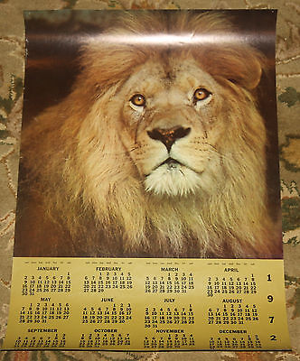 Beautiful Lion Head Vintage Original 1972 Large Wall Calendar Eyes Africa 30x21