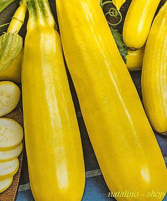 *Gelbe Buschzucchini* 10 Samen *Goldgelb & sehr zart* Sorte aus der Ukraine  Gelbe 10