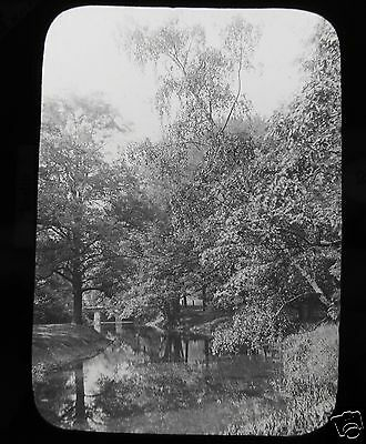 Glass Magic Lantern Slide A BRANCH OF THE NEW LAKE BERLIN C1890 GERMANY