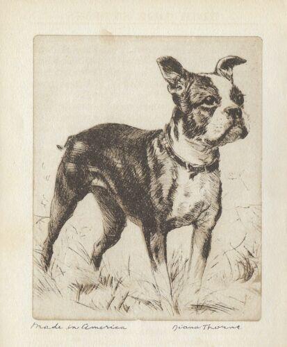 BOSTON TERRIER, MADE IN AMERICA  Vintage Dog Print Diana Thorne 1936