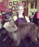 Experienced groomer needed for busy salon.