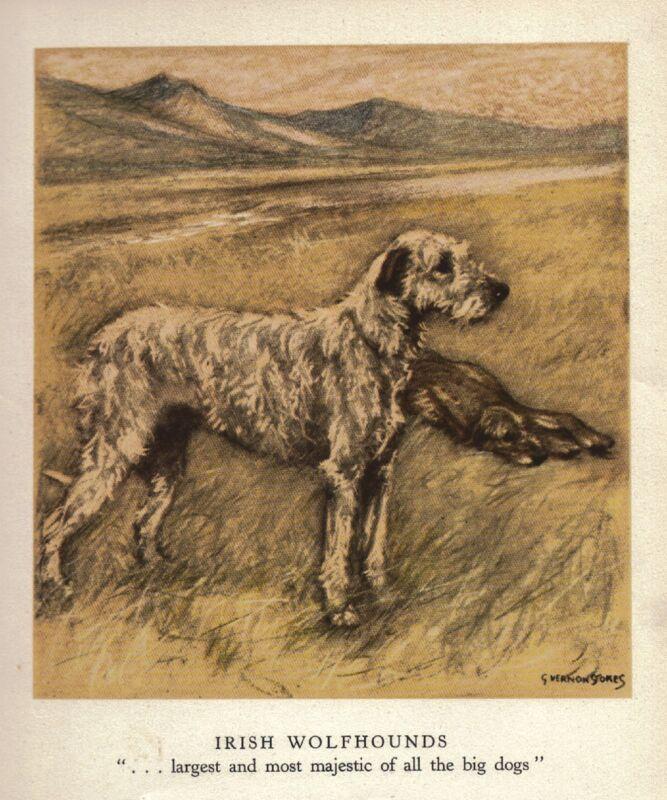 GORGEOUS IRISH WOLFHOUND VINTAGE RARE ART PRINT 1947 VERNON STOKES