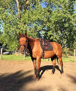 Free lease on all-round show horse