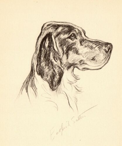 1940 Antique Gordon Setter Print Lucy Dawson Gordon Setter Illustration  3832j