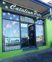 Pet Shop for sale Morisset Lake Macquarie Area Preview