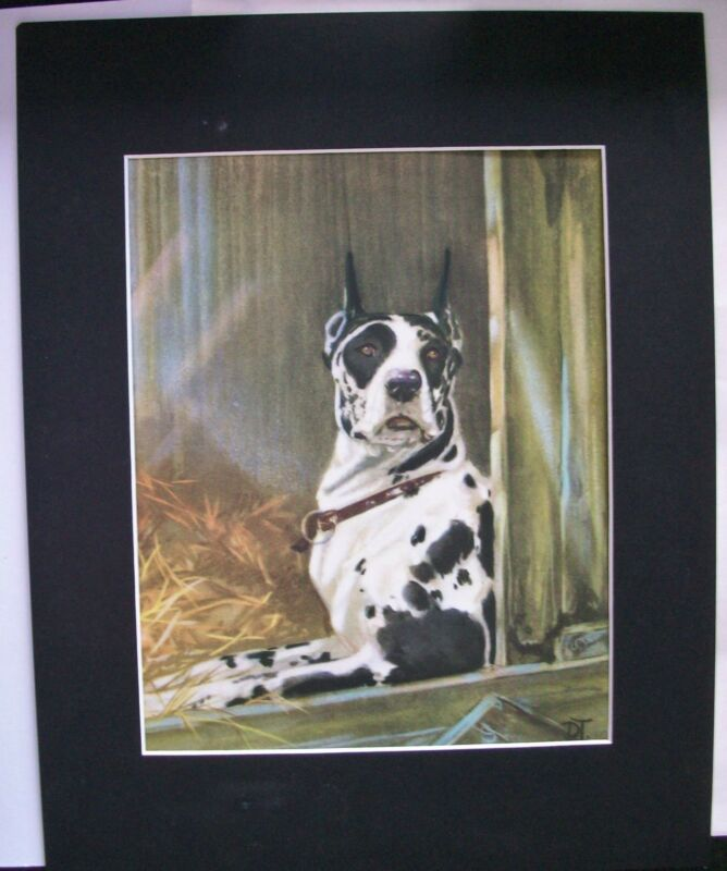 Print Diana Thorne Great Dane Harlequin Laying In Barn Bookplate Dog 1932 Matted