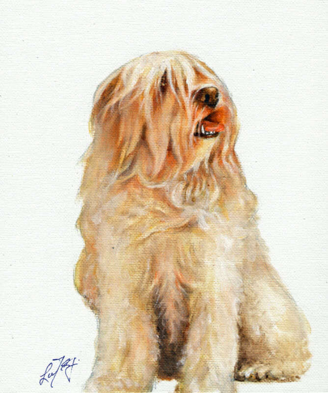 NEW Original Oil Art TIBETAN TERRIER Portrait Painting PUPPY DOG Signed Artwork