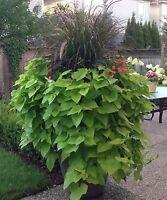 Garden Planter Custom Designed
