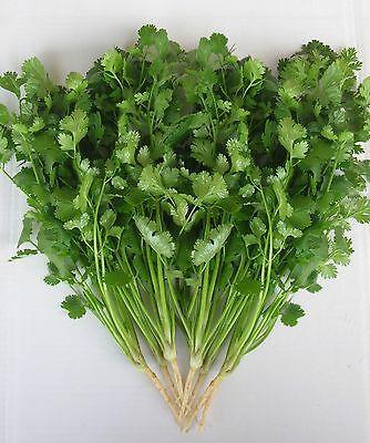 Aroma Herb (Herb - Coriander - Green Aroma - 100 Seeds - Economy)