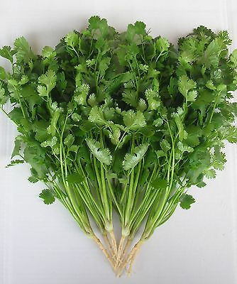 Aroma Herb (Herb - Coriander - Green Aroma - 100g Seeds - Bulk)