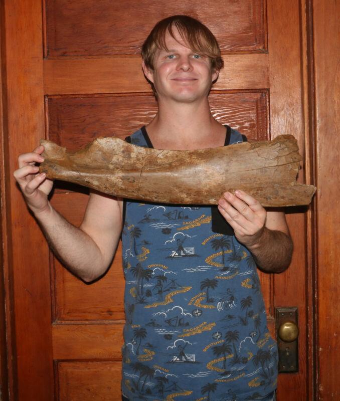 Edmontosaurus Scapula Bone - Hell Creek Formation Cretaceous - DINOSAUR FOSSIL