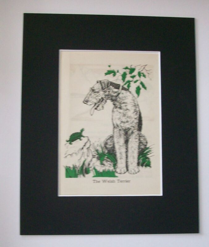 Welsh Terrier Diana Thorne Bookplate Print 1940 Matted Wire Hair Look At Turtle