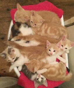 Free Kitten's