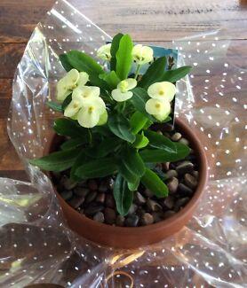 A pretty Christmas gift pot
